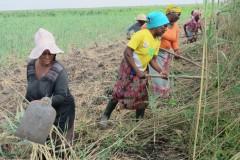 Justicia Ambiental/Amigos de la Tierra, Xai-Xai, Mozambique. Las bravas mujeres agricultoras aprenden y ponen en práctica la agroecología.