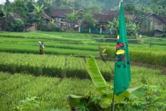 13 june - fieldvisit to Sukabumi, West Java.