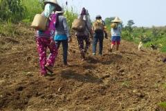 72-Rice-harvesting.LRC_